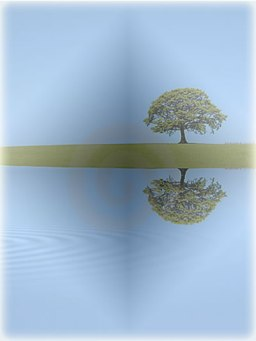 Oak Reflections